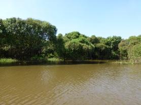 Half submerged trees